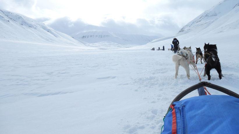 Fahrt mit dem Hundeschlitten auf Spitzbergen