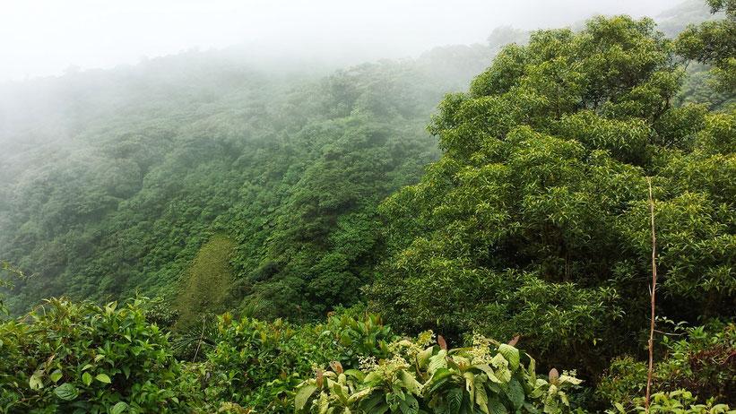 Monteverde Nebelwald, Costa Rica