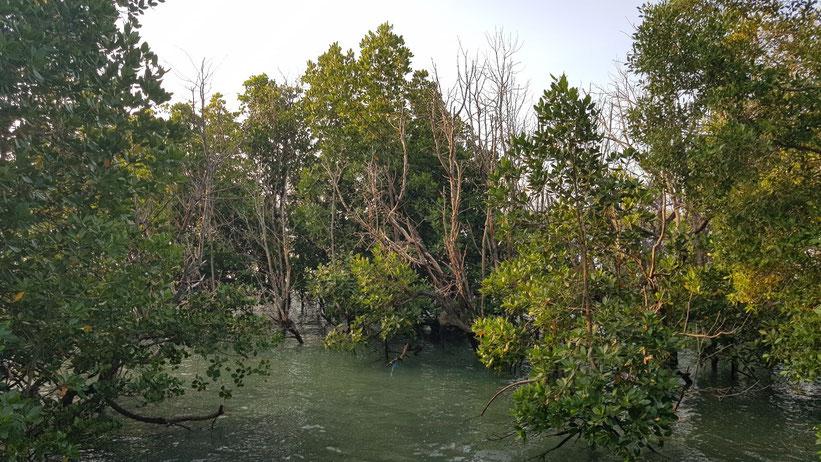 Mangroven Wanderung auf Chale Island, Kenia