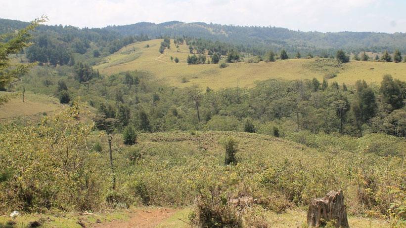 Kereita Forest, Kimende, Kenia