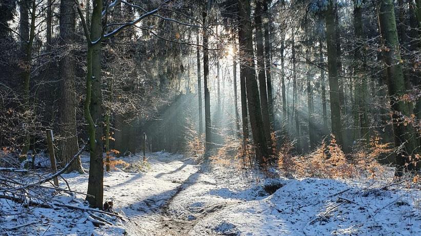 Winterwandern im Deister