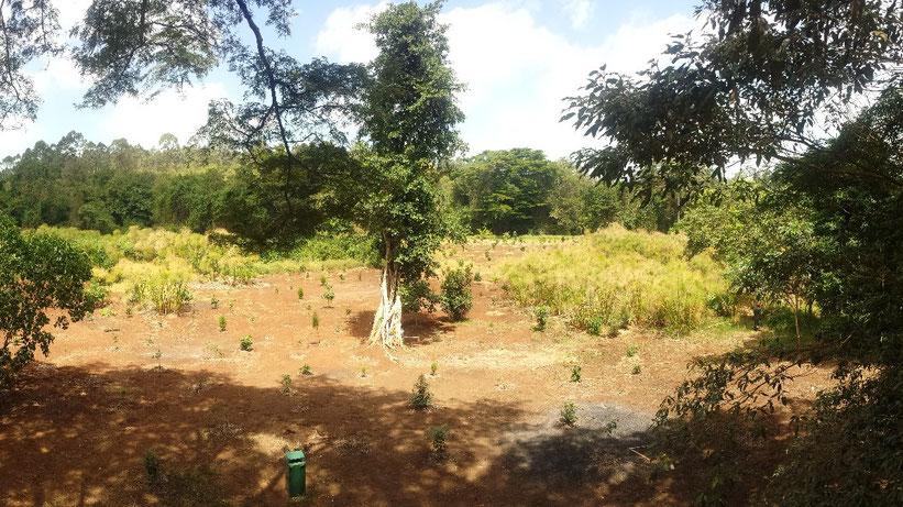 Karura Forest, Nairobi, Kenia