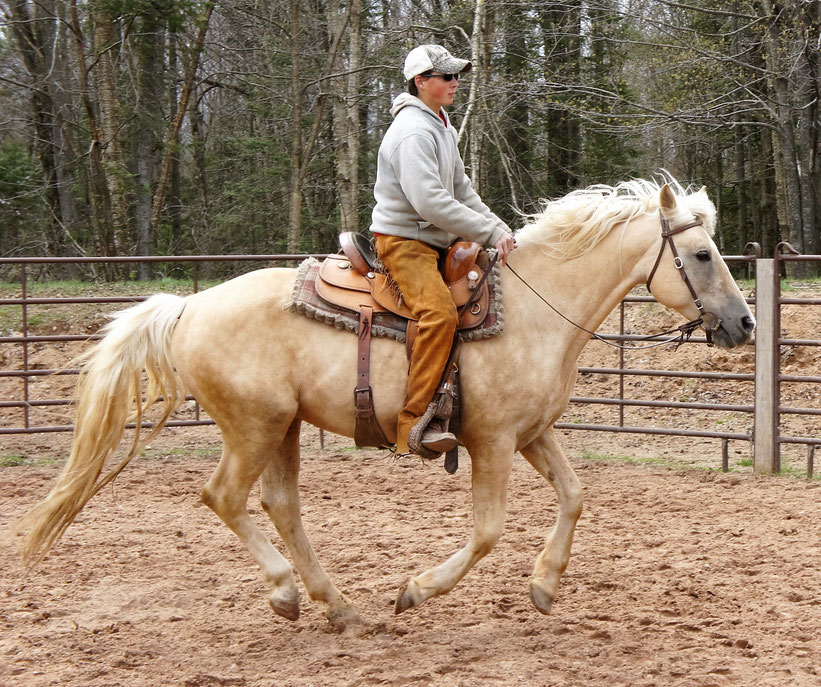 Norman Yoder, trainer, with Billy Yoder Horsemanship.