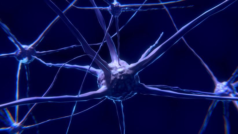 Neurobiologie des Lernens, Stress und emotionale Bewertungen für Lernen von Annäherung oder Vermeidung