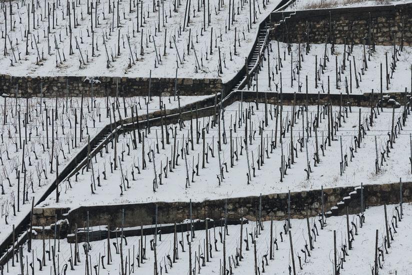 Vineyard in Winter, Rebberg im Winter, Twann, Bielersee