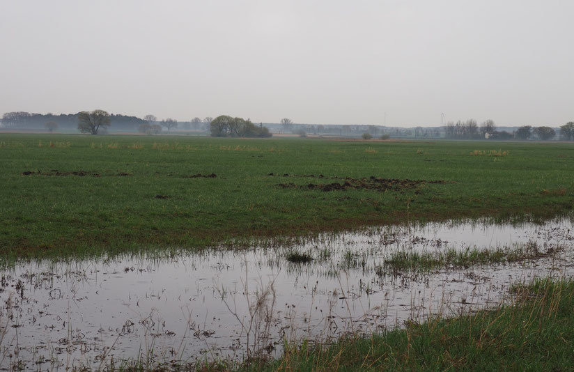 Wiesenbrütergebiet    Foto: Markus Bachmann
