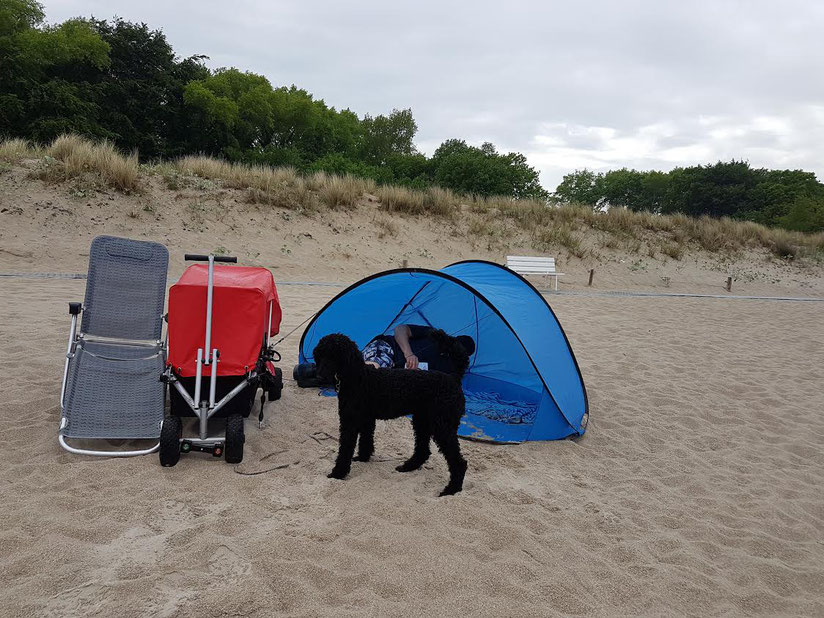 ulfBo - der wirkliche Strandwagen