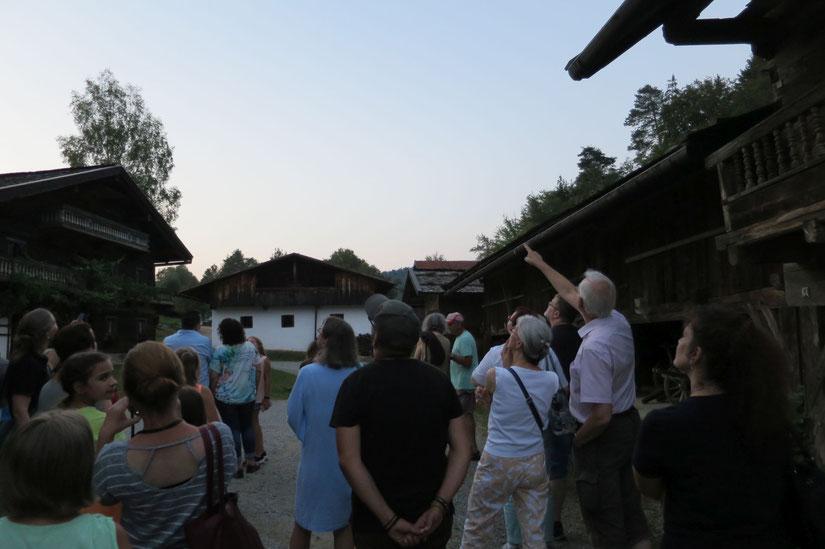 Bei einsetzender Dämmerung jagte eine Gruppe Abendsegler über dem Museumsdorf, Foto: Höltl