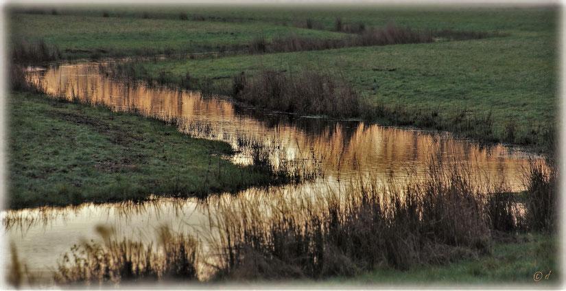 The Golden Creek