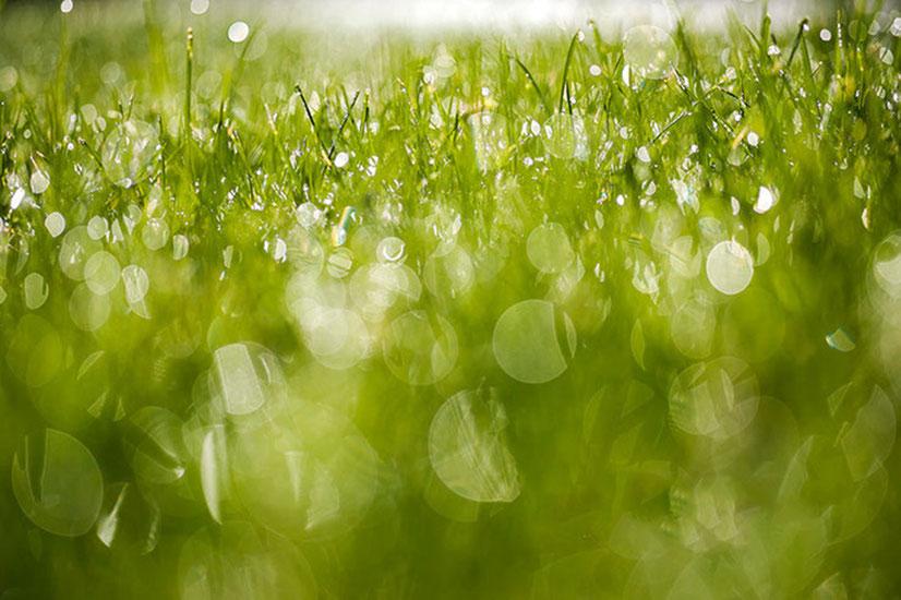 Druppels op het gras, macrofotografie