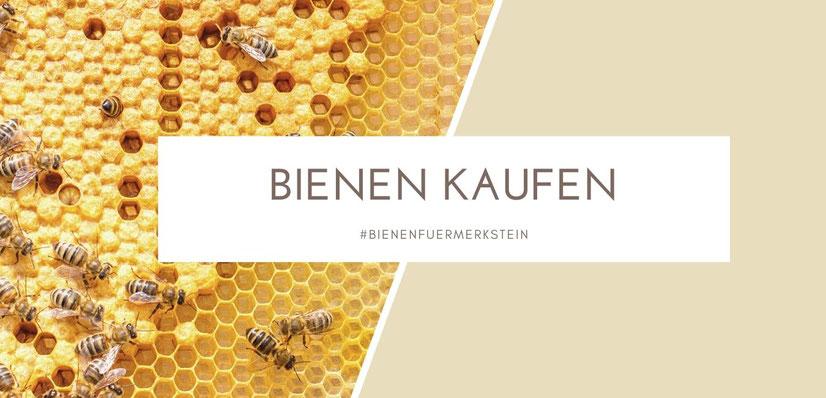 imker werden, biene maja, imkerei, biene, honigbiene, bienenstock, bienenkönigin, bienenkisten, bienenblumen, imkerhonig, bienenschwarm, mit bienen anfangen
