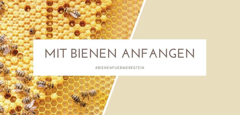 imker werden, Biene, BieneM, Biene Maja, Imkerei, Honigbiene, Bienenstock, Bienenkönigin, Bienenfreunde, Bienenpflanzen, Bienenblumen, Bienenzucht, Bienenvolk