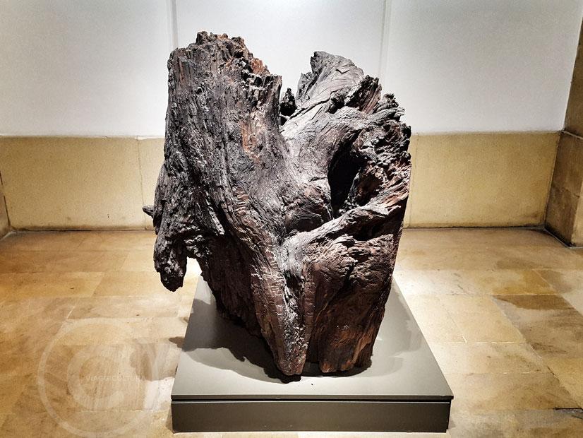 Antichissimo esemplare di cedro del Libano, Museo Nazionale di Beirut