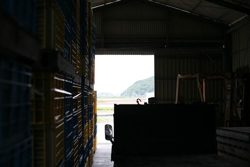 淡路島たまねぎ生産販売農家 ちどり農園 倉庫内
