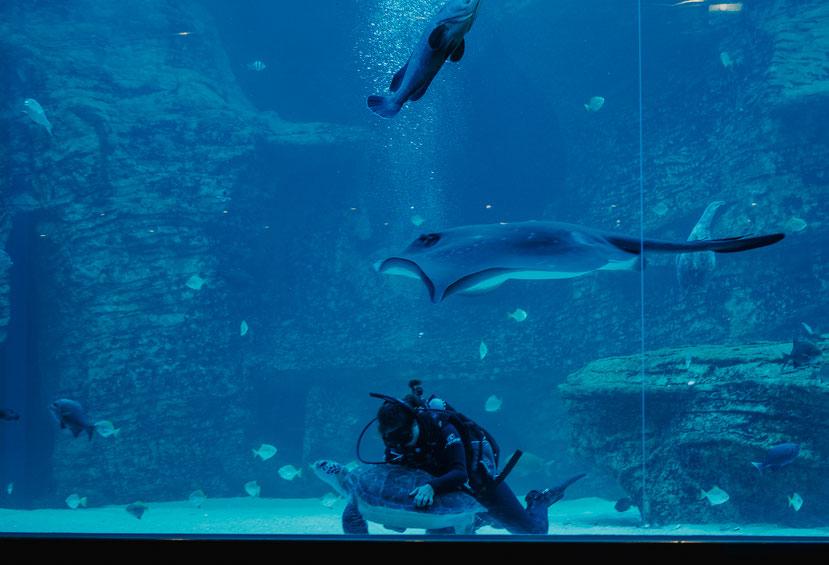 Hier seht ihr Bob mit einer Taucherin im Two Oceans Aquarium