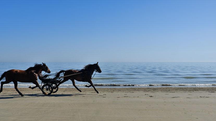 Mathieu Guillochon, photographe, couleurs, rivages, Manche, marée basse, France, Cotentin, Ste Marie du Mont, Utah Beach, trotteurs, aube, bleu, estran, rivages,