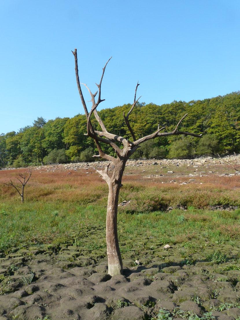 Les arbres ont résister depuis 1923