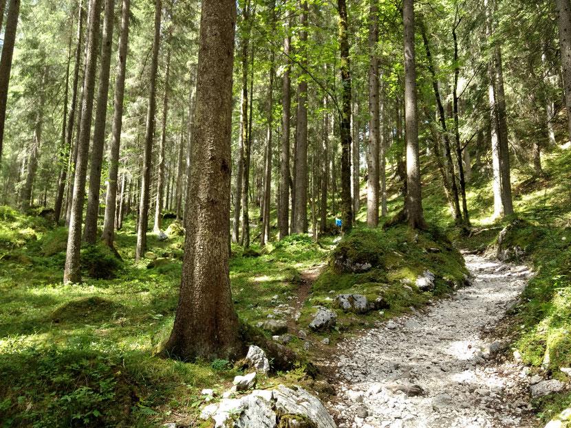 Toller Weg kurz vor der Bockhütte