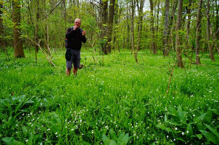 Johannes Dietrich führt essbare Wildkräuter vor.
