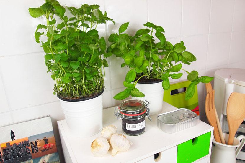 Küchenkräuter Küchen-Kräuter Urban Jungle Bloggers UrbanJungleBloggers Blogger Pflanzen Plantlove Alltagsabenteuer Alltagsabenteurer Freizeit