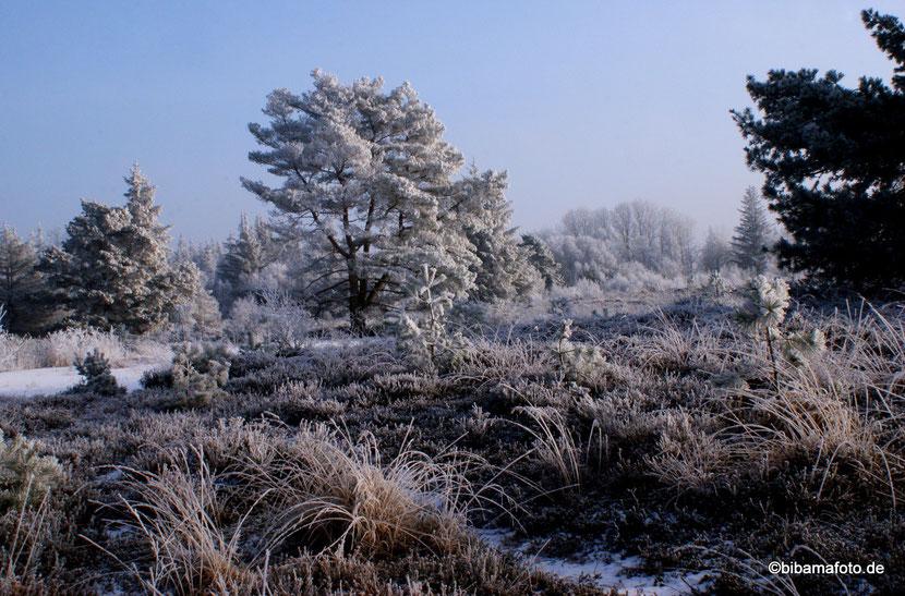 Winterwonderland ... Langenhorner Heide