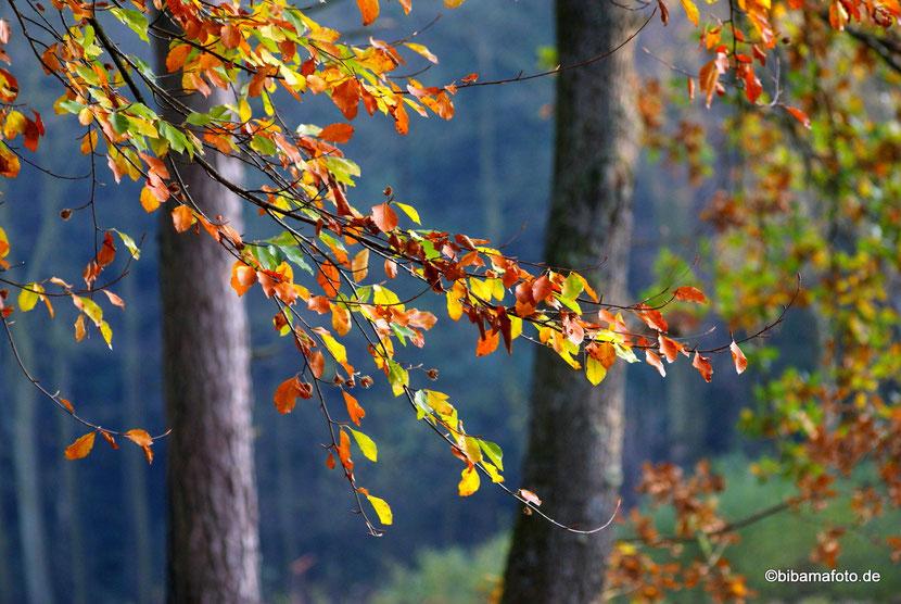 """""""Fotosafari"""" im Herbst ..."""