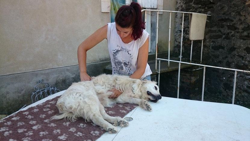 osteopathe animalier canin equin