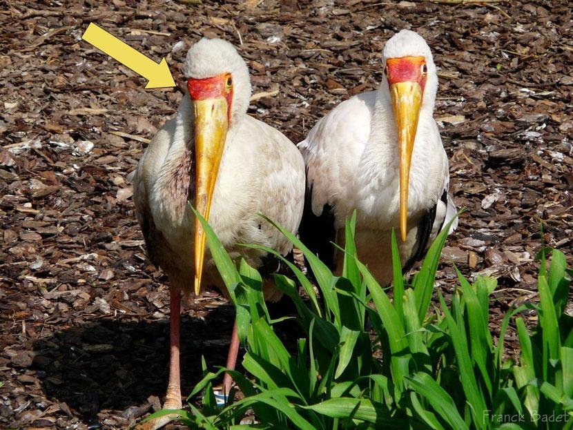 cire definition oiseaux