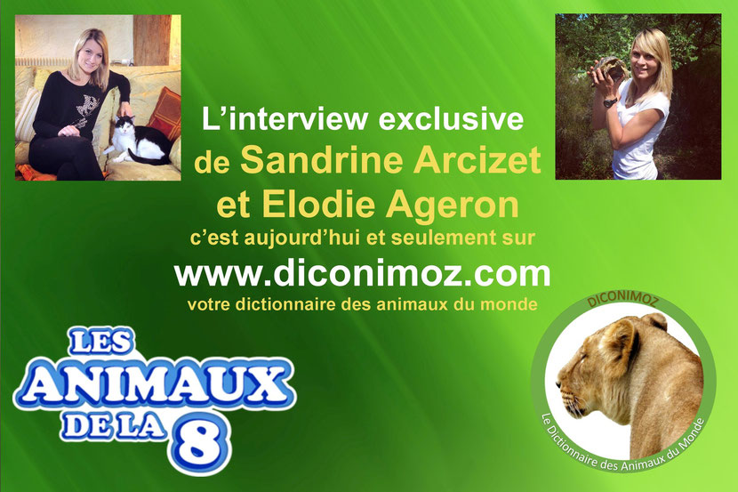 interview elodie ageron sandrine arcizet les animaux de la 8