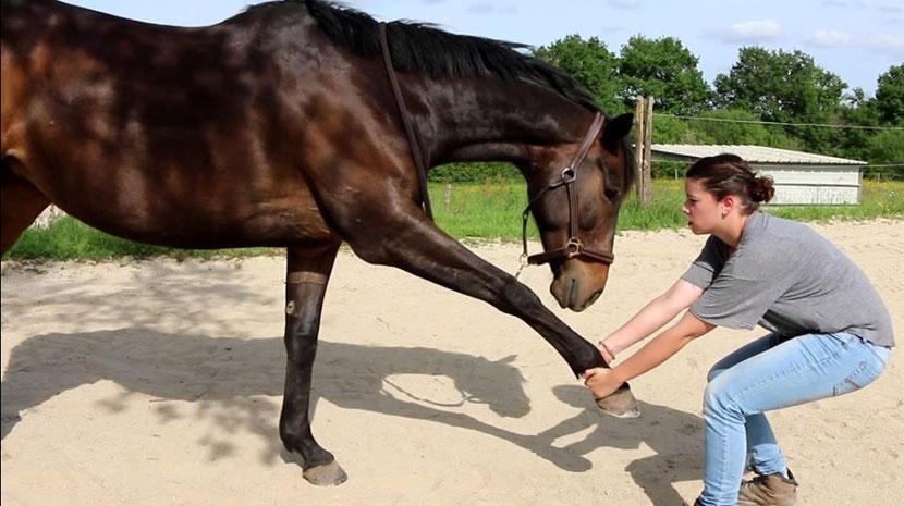 ostheopathe animalier emmanuelle lethon