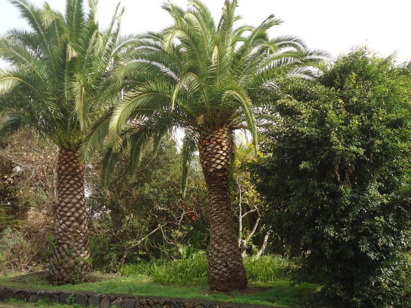 Parque Guadiantor, San José de Lotavia / parque en Breña Alta, La Palma.