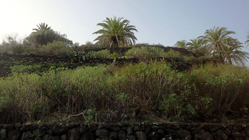 El jardín vertical de Lotra / Bancales en El Socorro, La Palma.