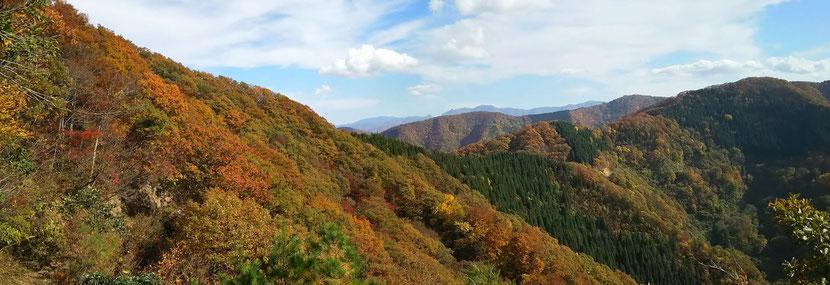 下山途中,紅葉に染まった峠方面を望む。そのず~っと先に冠山が見えます。