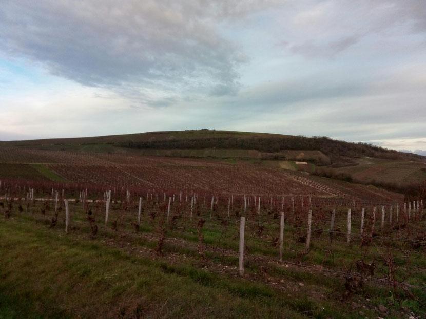 Vignes et collines du Sancerrois