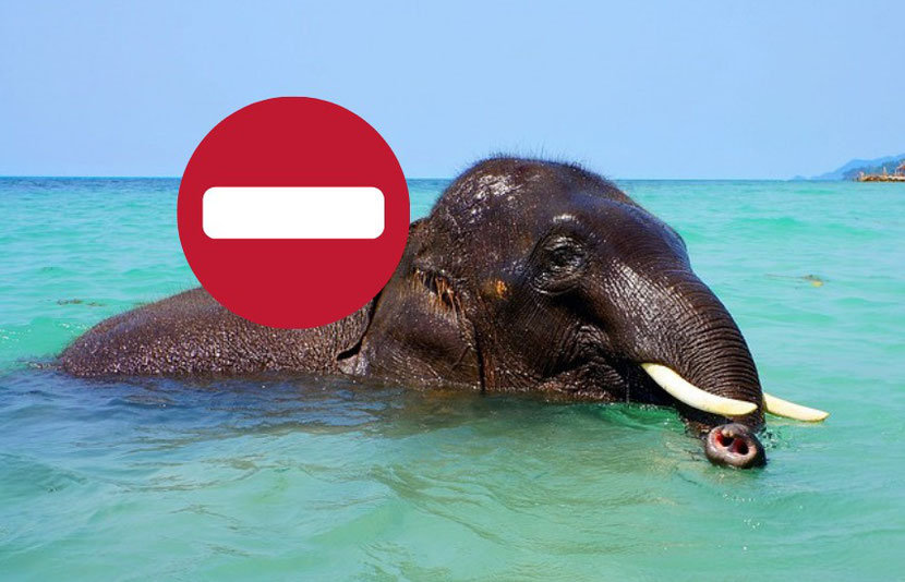 why you should not ride elephants in Thailand