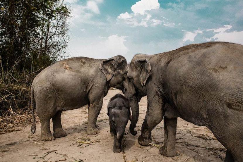 an elephant family