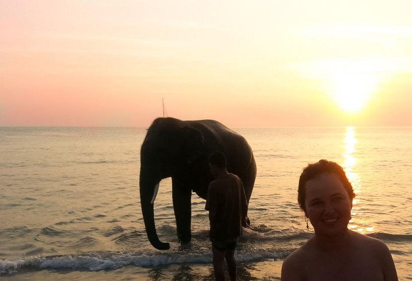 elephant bathing in Thailand
