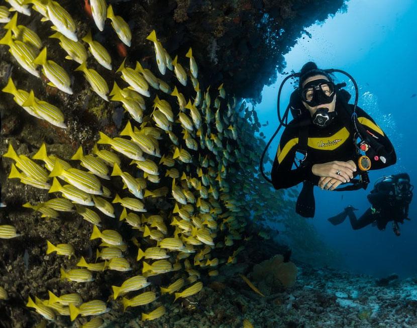 diving near Athens in Nea Makri