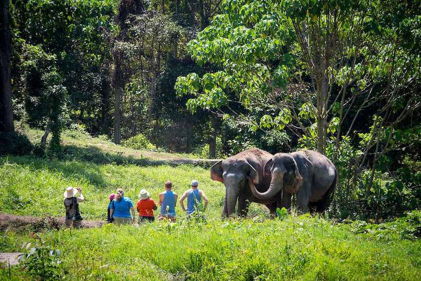 a visit to Phuket Elephant Sanctuary