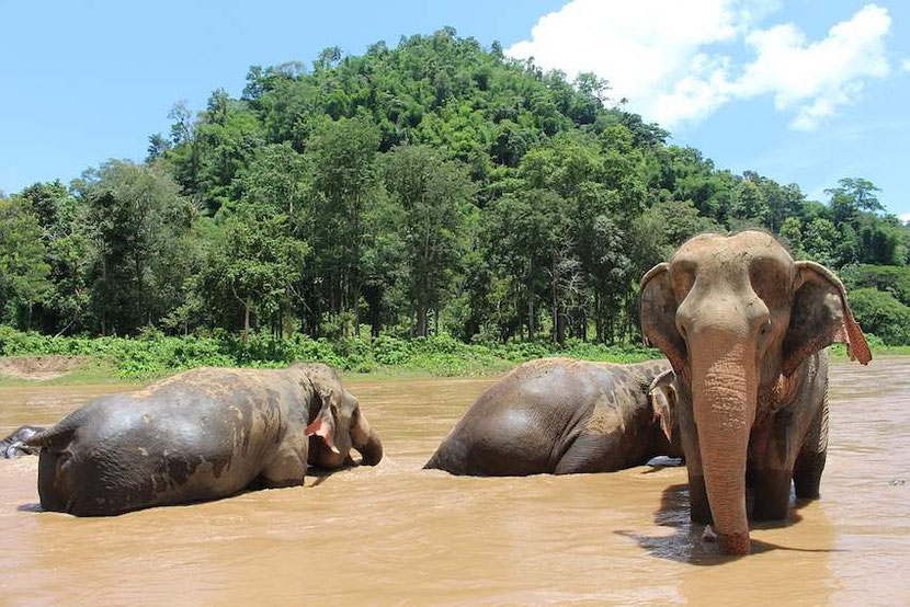 here is how an ethical elephant sanctuary in Thailand looks like