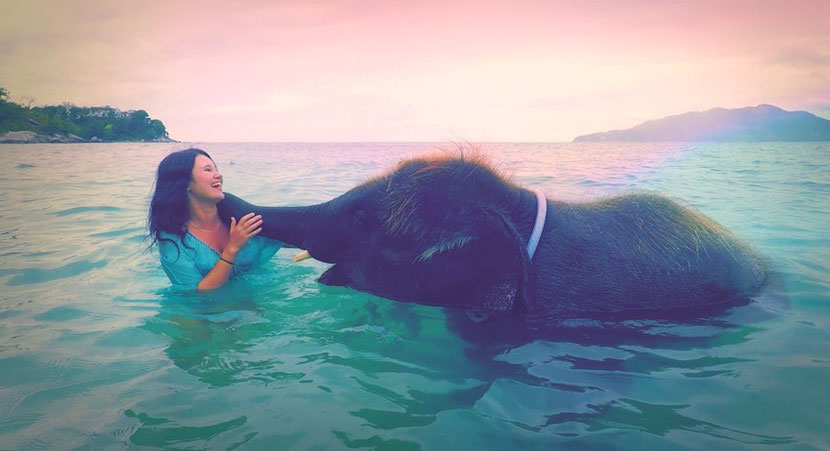 elephant swimming experience in Thailand