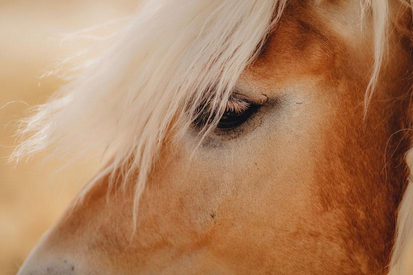 Pferdfotografie,  liebe, rüsselsheim am main, trebur, astheim, darmstadt, mainz, pony, pferdfoto, hundfotografie, fotografie, portrait, liebefotografie, fotograf in Hesssen, Rhein-main-Gebiet, hochzeitsfotograf
