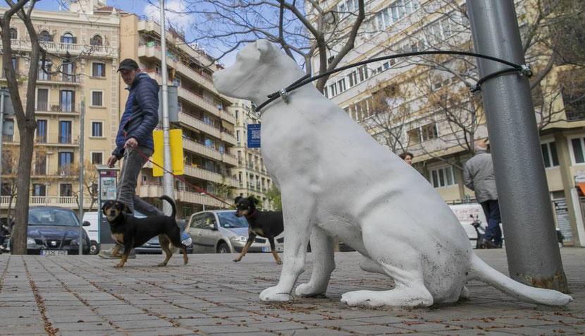 ayuntamiento de barcelona perros en adopciòn