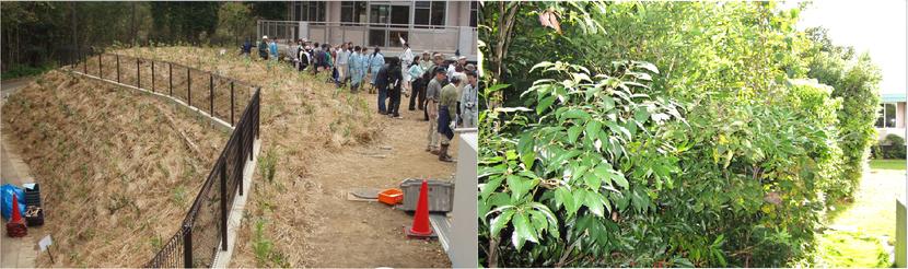 植樹祭直後と6年後の比較画像