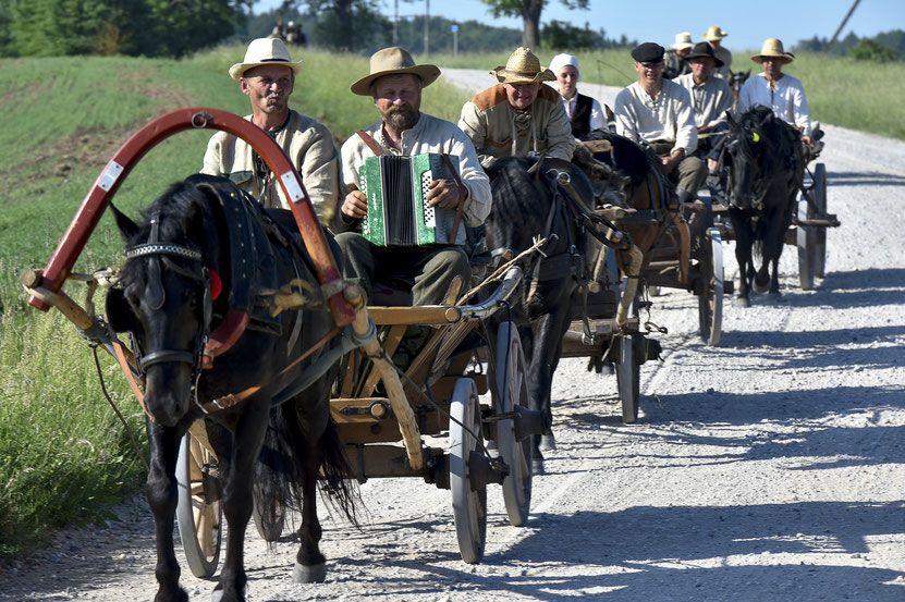 Žemaitukų traukiami vežimai Lietuvos vieškeliu rieda į Bėk bėk žirgeli šventę