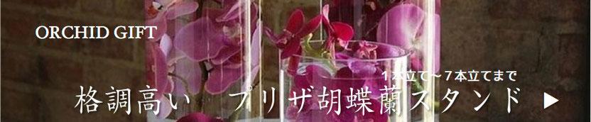 プリザーブドフラワーの開業や開店や開院祝いの胡蝶蘭鉢物