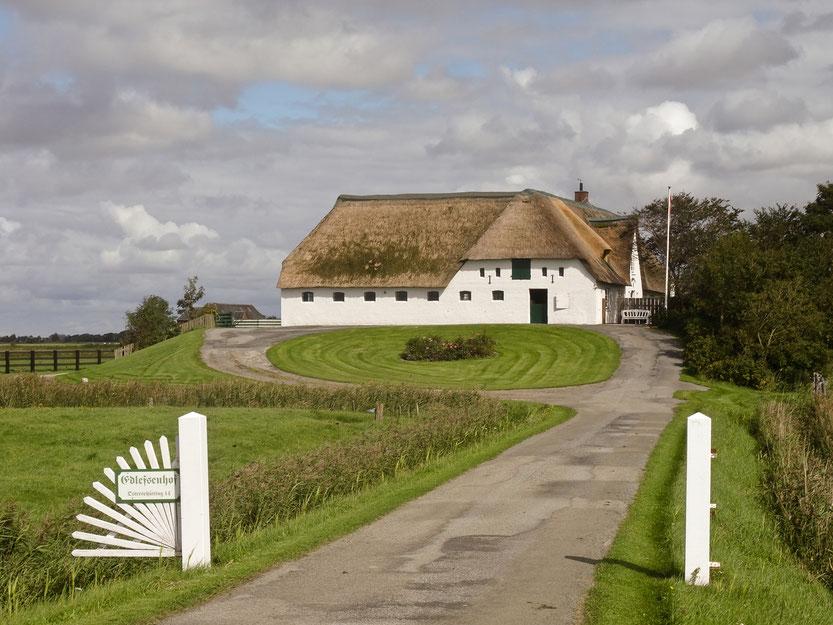 Ein klassischer Reetdach-Hof auf Pellworm - hier der Edlefsen-Hof