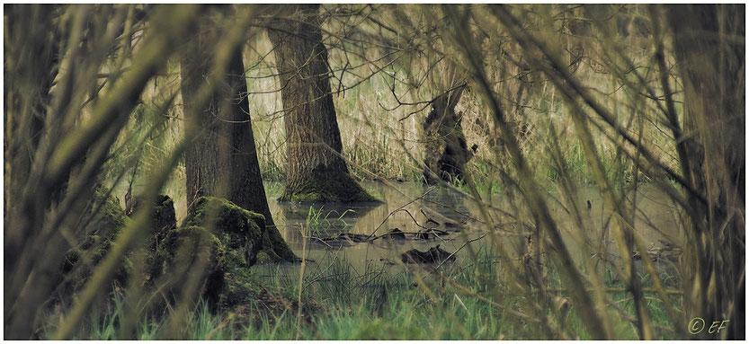 Feuchtgebiete, nasse Füße