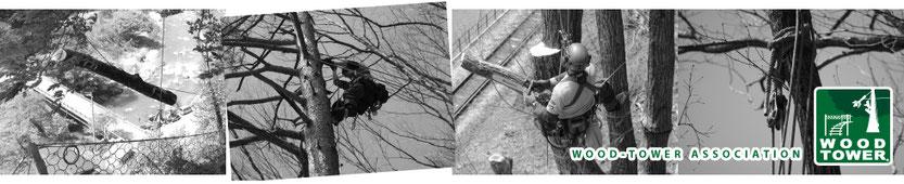 ウッドタワー工法による巨木・高木の伐採の様子