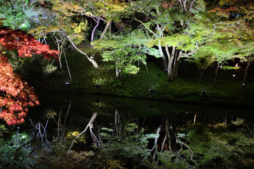 Kyoto Lightshow Kodai-ji Temple Night Illumination Event